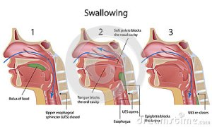 swallowing-process-27714658