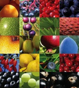 fruit-grid